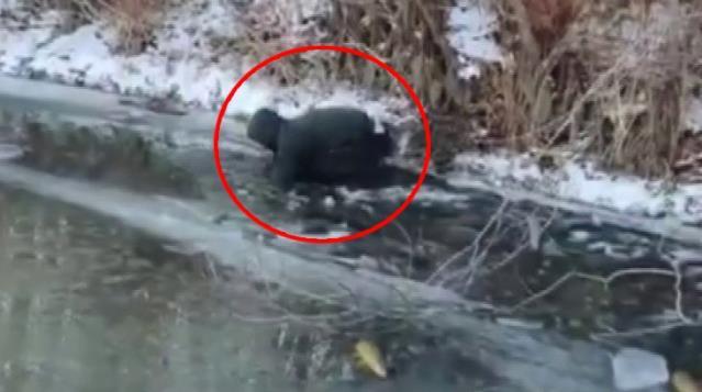 Eksi 20 derece bile onları durduramadı! Buz tutan nehirde elleriyle balık avladılar