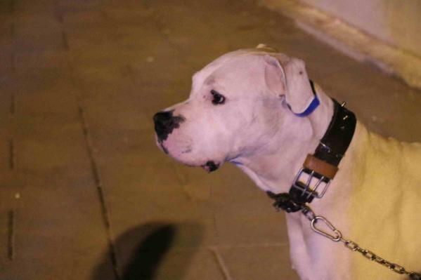 Köpeğini gezdirdiği sırada vurularak öldürüldü