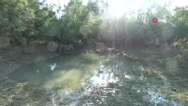 Son dakika gündem: Manavgat'ta çamura dönen göletlerde balık ölümleri
