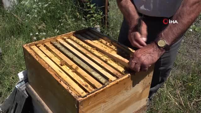 Kuraklık nedeniyle arıların geleceği tehlike altında