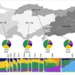 turk-toplumunun-genetik-kodlarina-isik-tutan-arastirma-sonuclandi-613f44700c26b